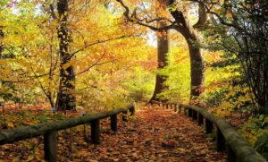 tupelo_path